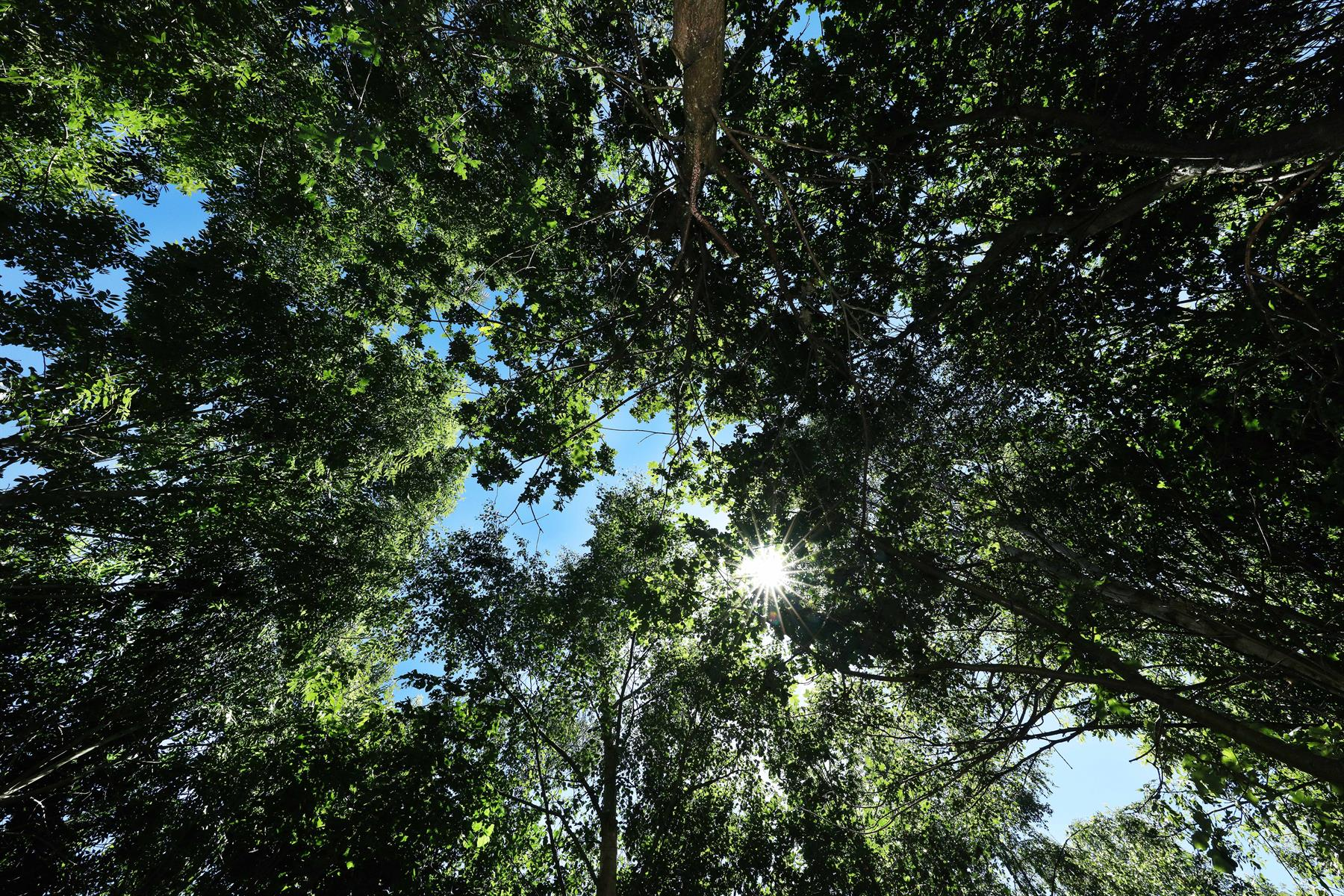 Image of a woodland canopy