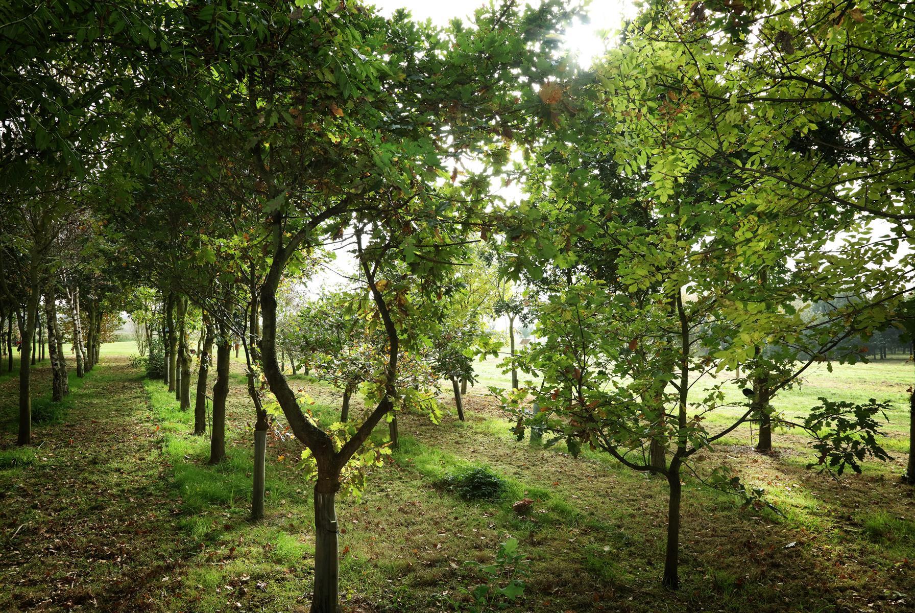Trees at the Arboretum